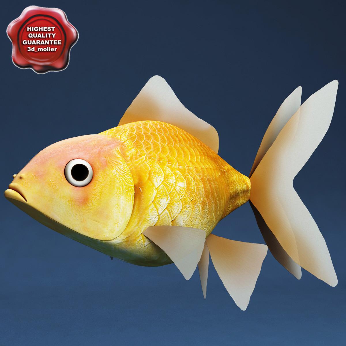 gold fish 3d c4d
