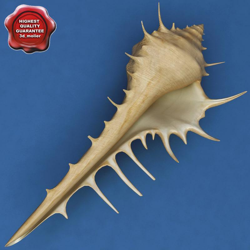 3d murex venus comb seashell