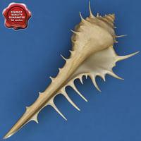 Murex Venus Comb Seashell