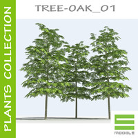 plants oak - tree 3d model