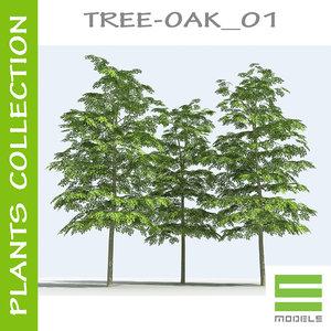 plants oak - tree 3d model