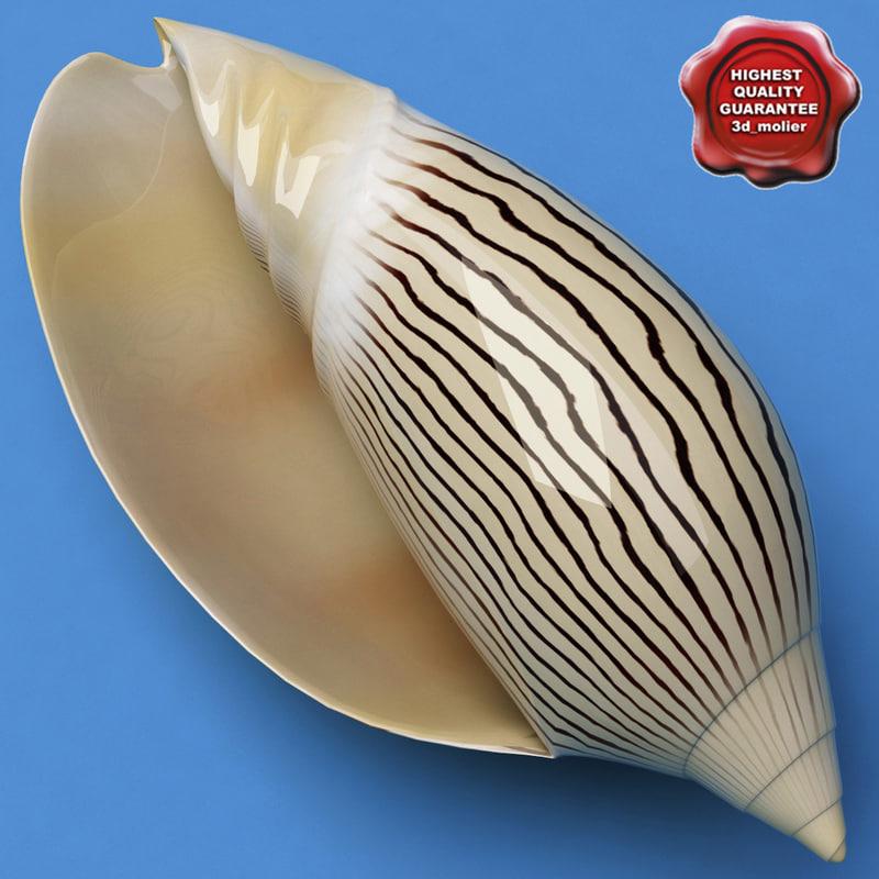 seashell amoriaellioti 3d model