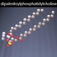 maya molecule dipalmitoylphosphatidylcholine