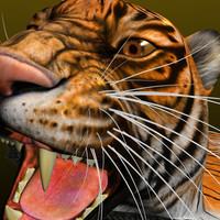 maya tiger skin rug