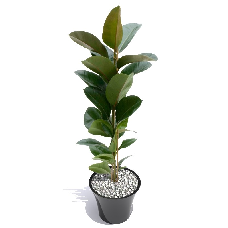 plant including pot 3d model