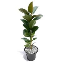 plant including pot 3d model