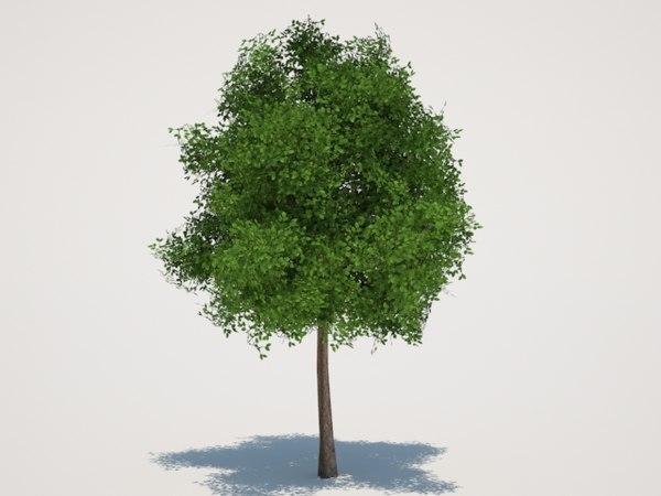 tree polygons 3d model