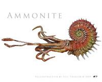 3d model ammonite