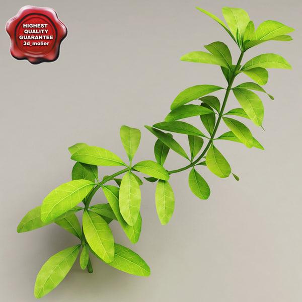 aquarium plant hygrophila polysperma 3d 3ds