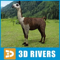 Llama by 3DRivers