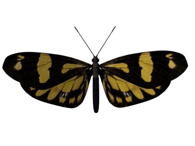 ma moth