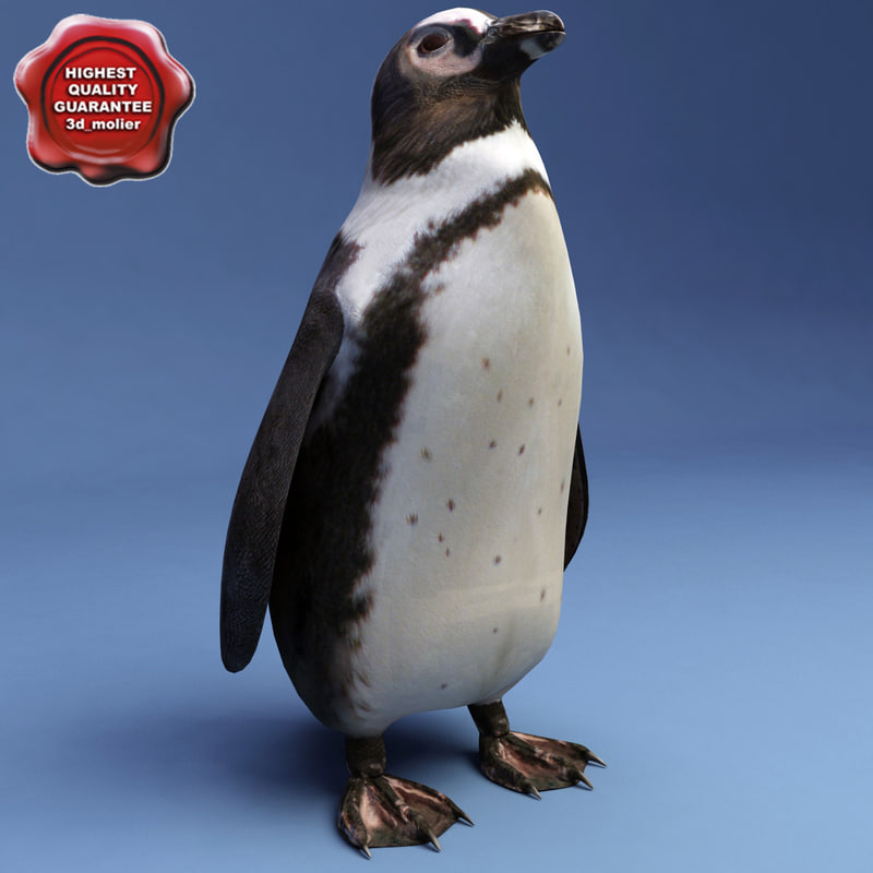 penguin modelled 3d model