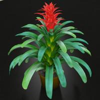 realistic guzmania plant 3d model