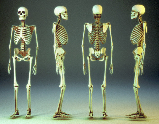 skeleton 3ds, Skeleton
