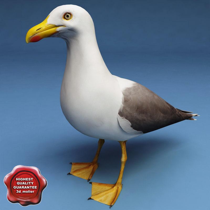gull modelled 3d model