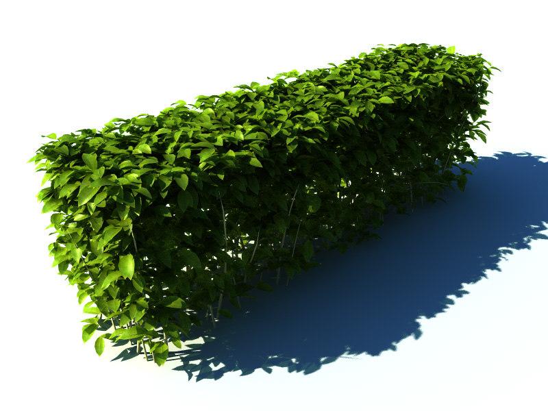 Hedge plant 3d model for Plante 3d dwg