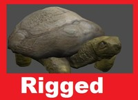 turtle rigged 3d model