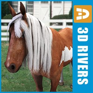 3d colored pony horse model