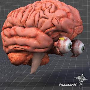eye brain 3d model