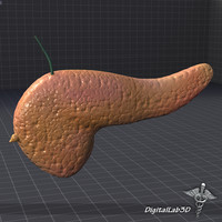 3d model pancreas medical gland