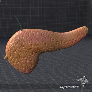 3d model pancreas medical gland