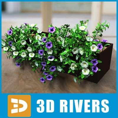 3d model petunia flowerpot