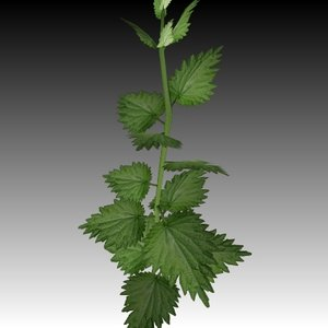 3ds max stinging nettle