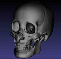free skull 131000 3d model