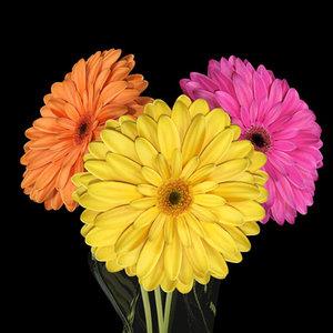 daisies flower 3d model