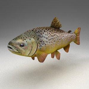 trout 3d model