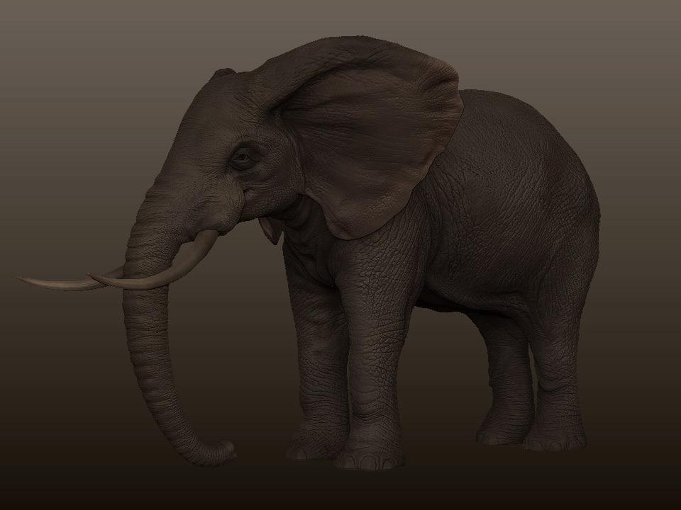 elephant animation 3d model