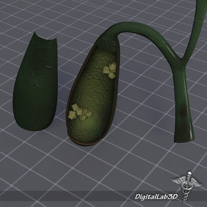 3d model gall bladder anatomy
