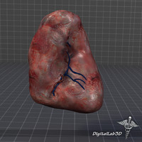 spleen medical animation 3d model