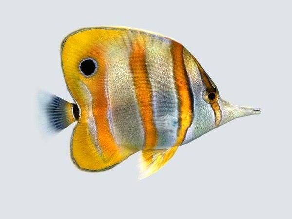 fish butterfly 3d model