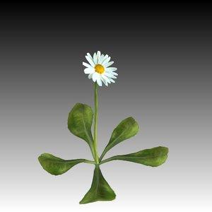 daisy plant flower 3d model