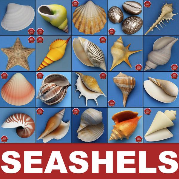 seashells v3 sea shell 3ds