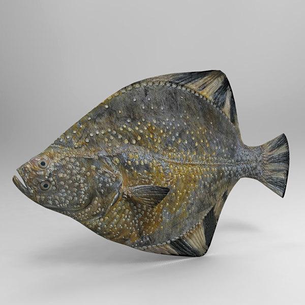 3ds max flatfish fish