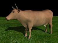 Cow_km