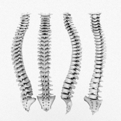 3d model human skeleton lumbales spine, Skeleton