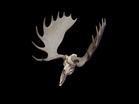 3ds max moose antlers