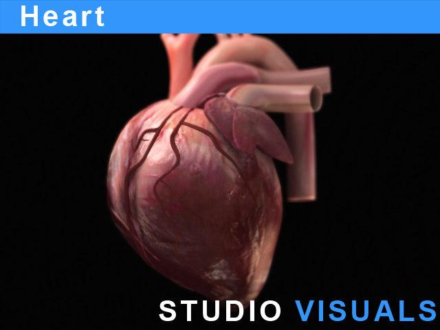 anatomy heart max