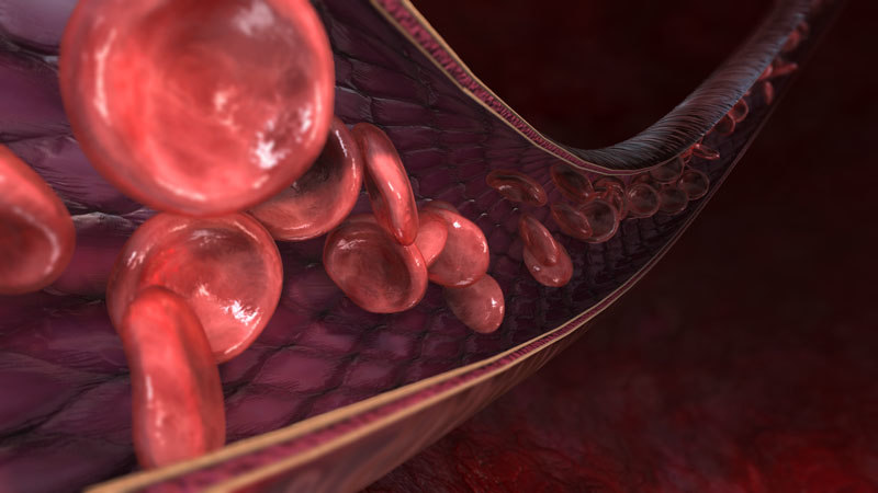 blood vessel flowing cells 3d model