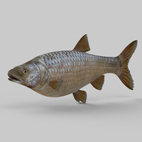 northern pikeminnow 3d 3ds