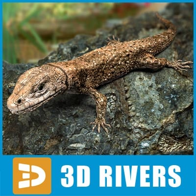 3d lizard reptiles