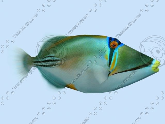 max picasso triggerfish