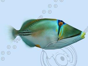 max picasso triggerfish