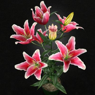 3dsmax stargazer lily