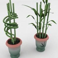3d lucky bamboo