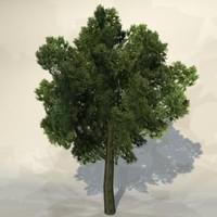 Tree_n_06.zip