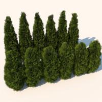 Plant Cedar Bushes